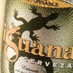 Icono-iguana